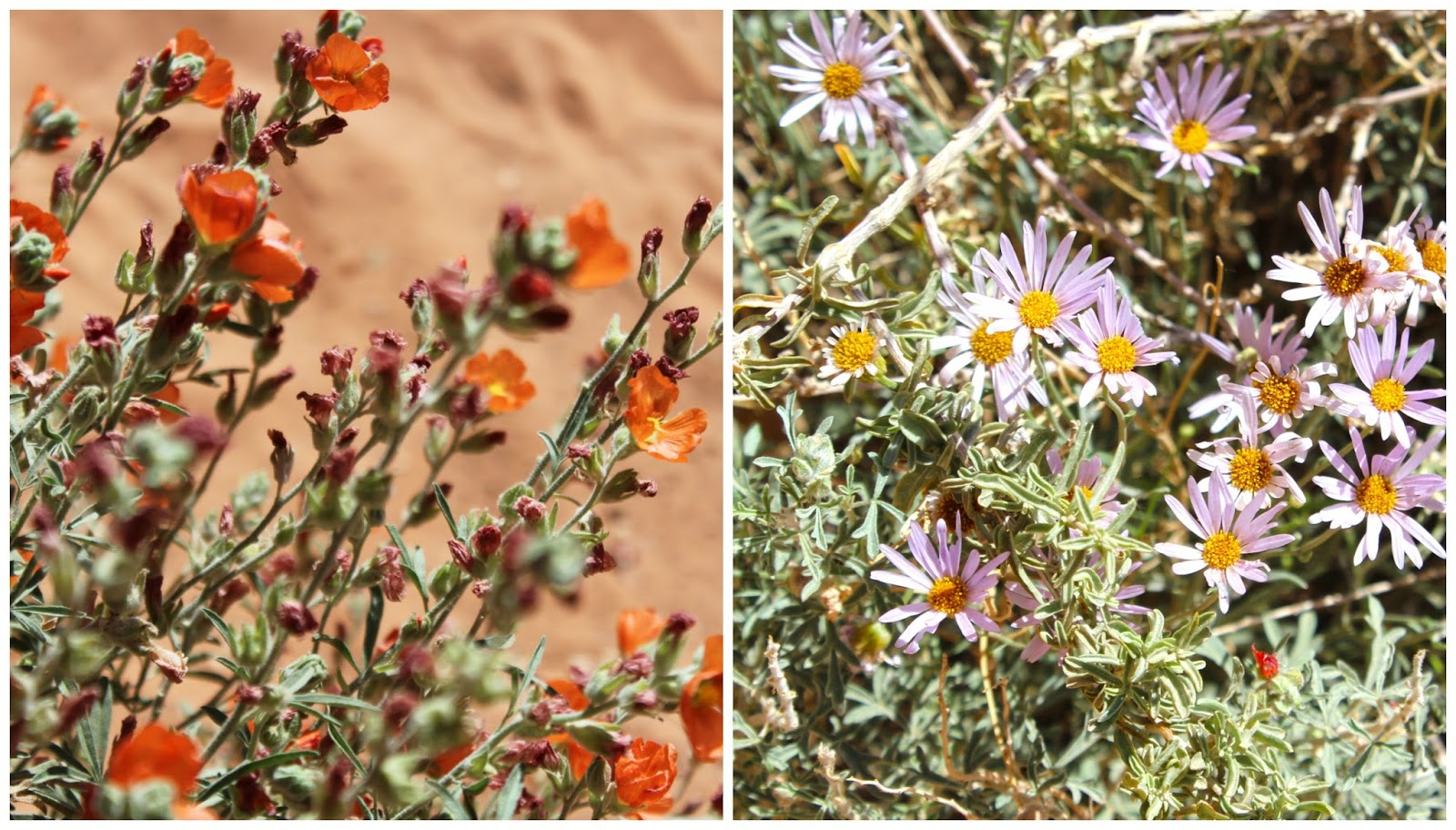 spring desert utah