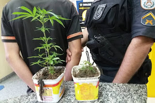 http://vnoticia.com.br/noticia/2860-pm-detem-jovem-com-tres-pes-de-maconha-no-quintal-de-residencia-em-santa-clara