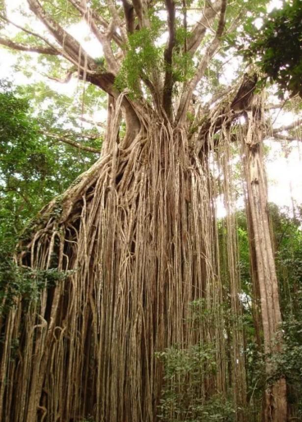 Akar Tumbuhan : Pengertian, Fungsi, Struktur, Sifat & Jenis