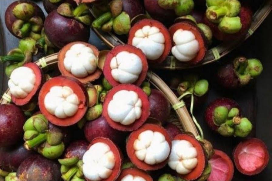 Bibit Manggis Hibrida SuperMurah Sumatra Barat