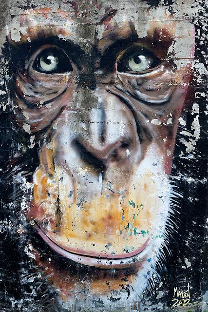Grafiti Chimpancé