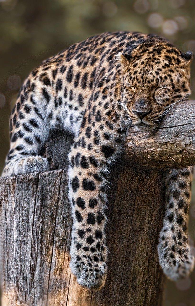 Taking a nap.