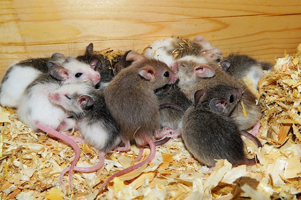 """Universe 25: Mouse """"Utopia"""" Experiment That Turned Into an Apocalypse"""
