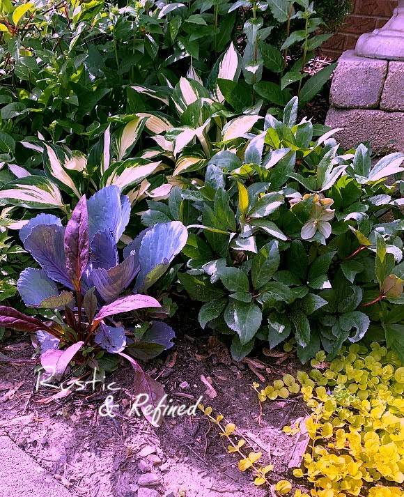 Why color and texture are important in the garden