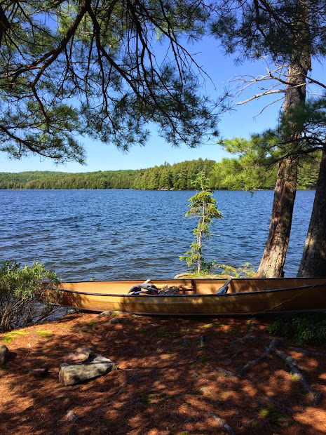 Wild With Jimmy Canoe Trip - Algonquin