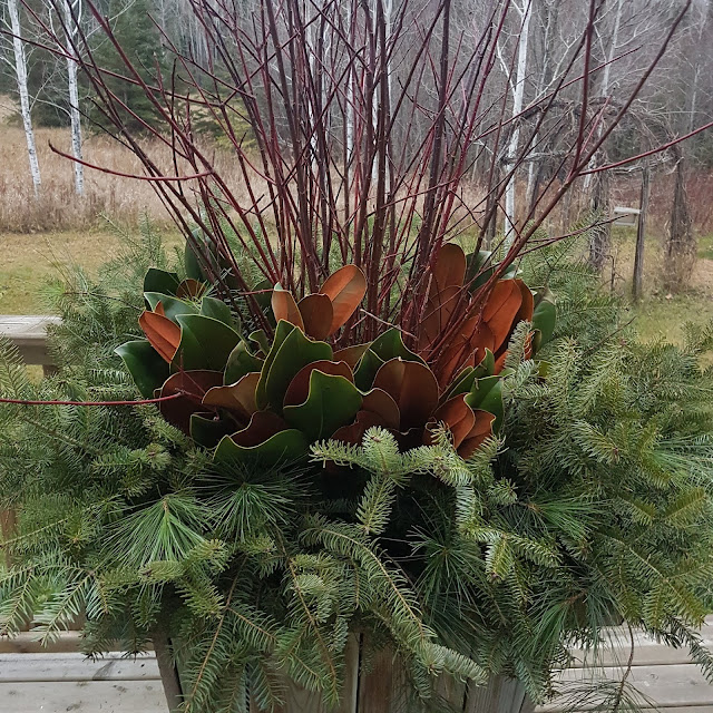 evergreens and magnolia in planter at The Camellia, thunder Bay