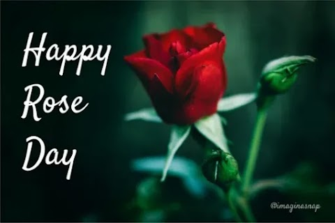 Happy Rose Day Images 2021 Download  in HD