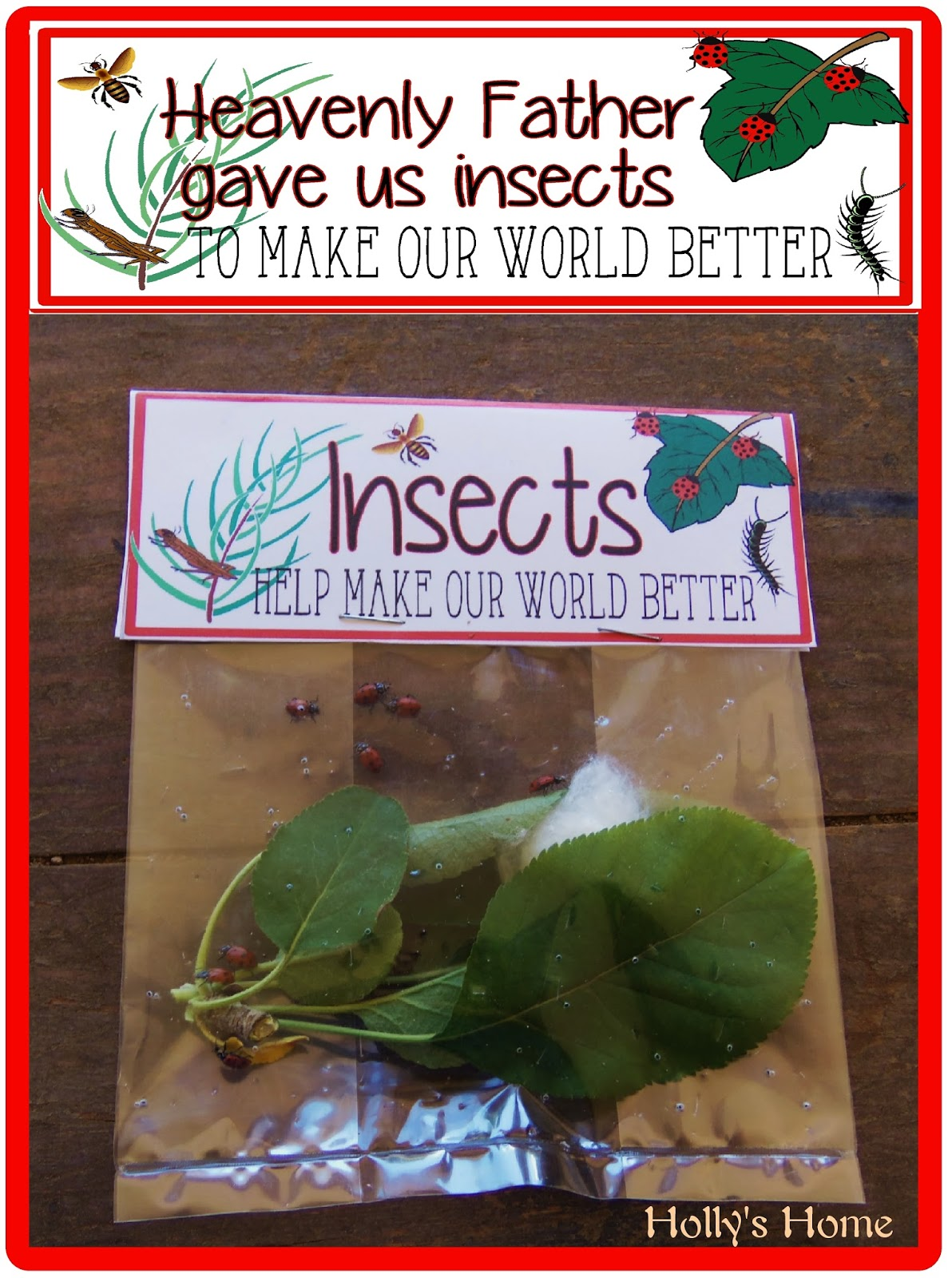 http://hollyshome-hollyshome-hollyshome.blogspot.com/2014/03/heavenly-father-gave-us-insects-to-make.html