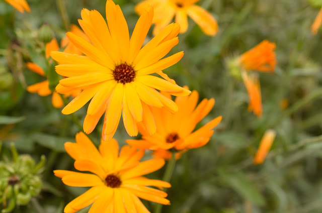 Calendula flowers work really well in Green People cleanser