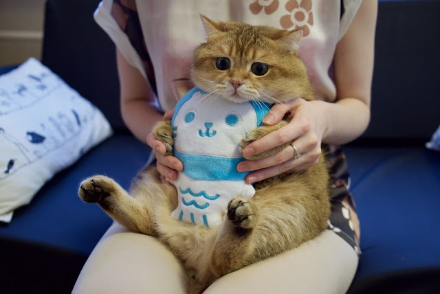 Meet Hosico, Real-Life Puss In Boots