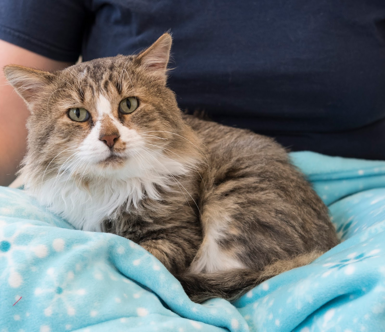 Feline Rescue Cat Tales: Keeping Your Cats Calm With