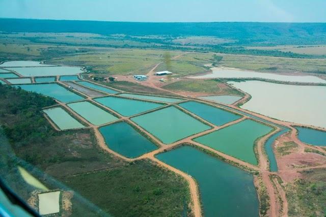 Alto Paraguai vê vocação na piscicultura e busca expansão; veja o vídeo