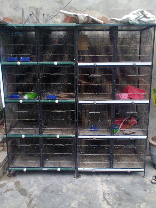 8 Portion Cage For Sale In Lahore - Pets For Sale In Pakistan