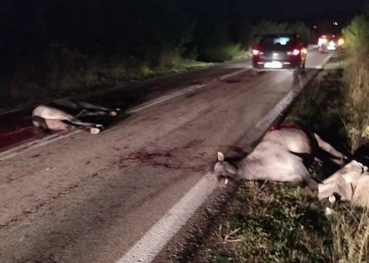 Νεκρά 2 άλογα στους Αμαξάδες μετά από τροχαίο