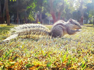 https://commons.wikimedia.org/wiki/File:Cute_squirrel_lays.jpg