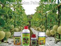 Pupuk Nasa Untuk Memperbesar Buah Melon