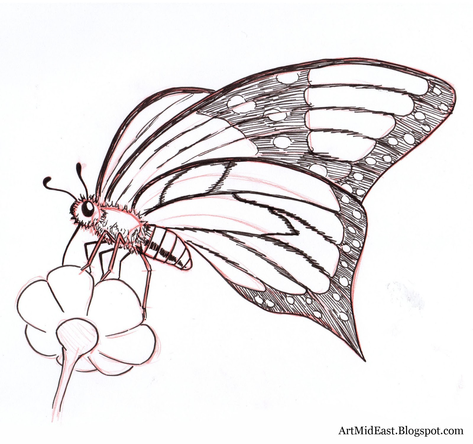 How to Draw a Butterfly: Step by step | Drawing Lessons