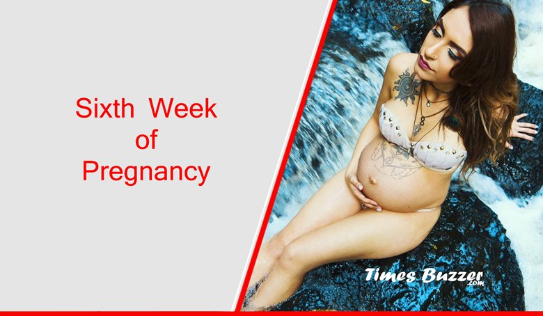 Sixth Week of Pregnancy
