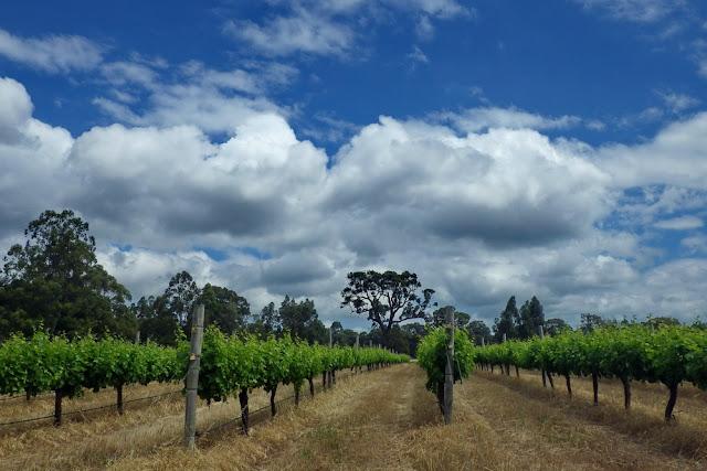 MargaretRiver, Margaret, River, Wein, Reben, Westaustralien, Rebberge