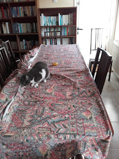 cat examining curtain spread out on the table