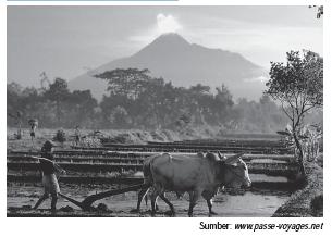 Bentuk Kegiatan Pertanian Indonesia