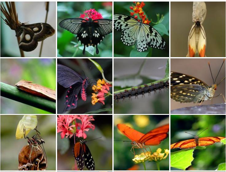 LA GRANGE AUX PAPILLONS, CHIMAY, Hainaut, vlinders, virelles, Lepidoptera, Schmetterlingen, butterflies, schubvleugeligenn