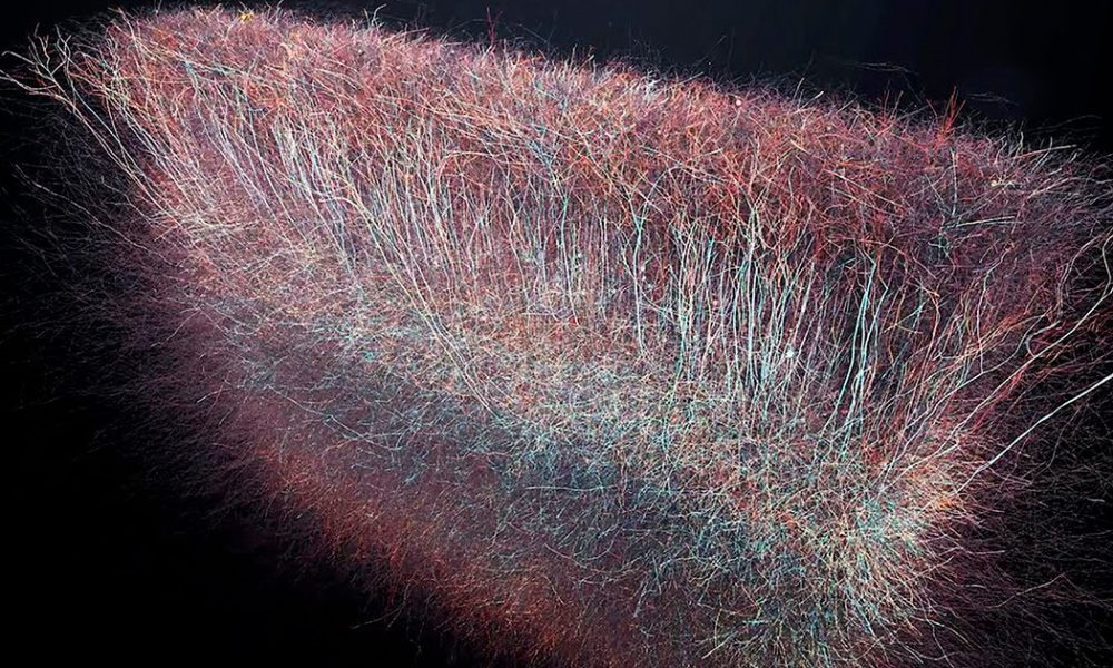 Scientists Have Discovered A Multidimensional Universe Inside The Brain