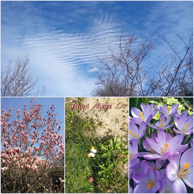 Garten März-April 2020