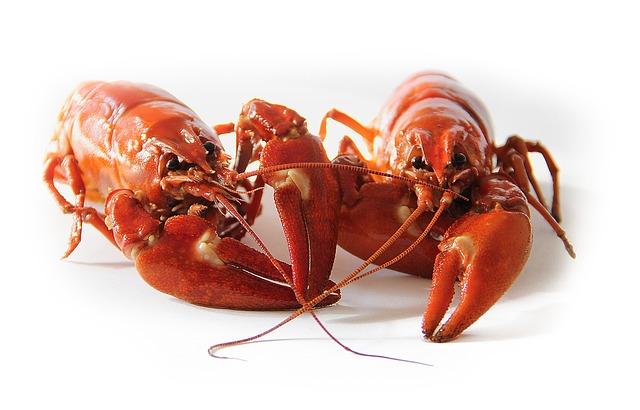 Los cangrejos chupan las colas de las cabezas