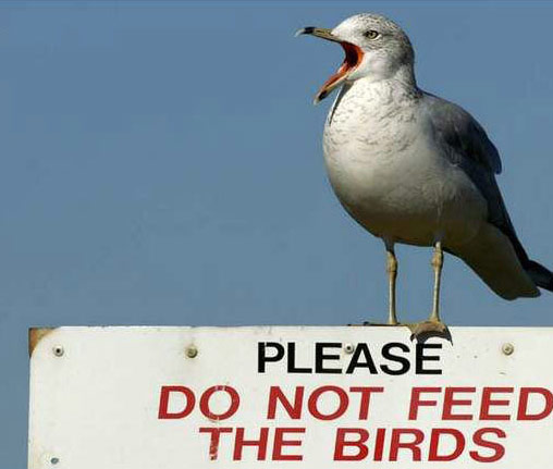 Funny Picture Clip Funny cool photos Cool Funny Birds Pictures
