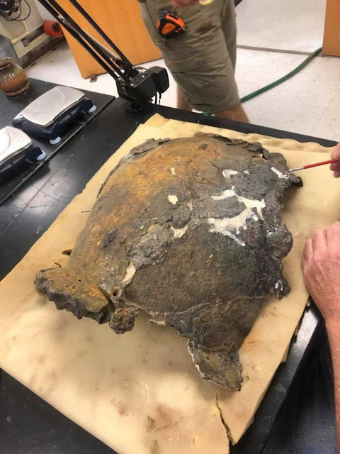 UWF archaeologists make new discoveries during Emanuel Point I artifact restoration