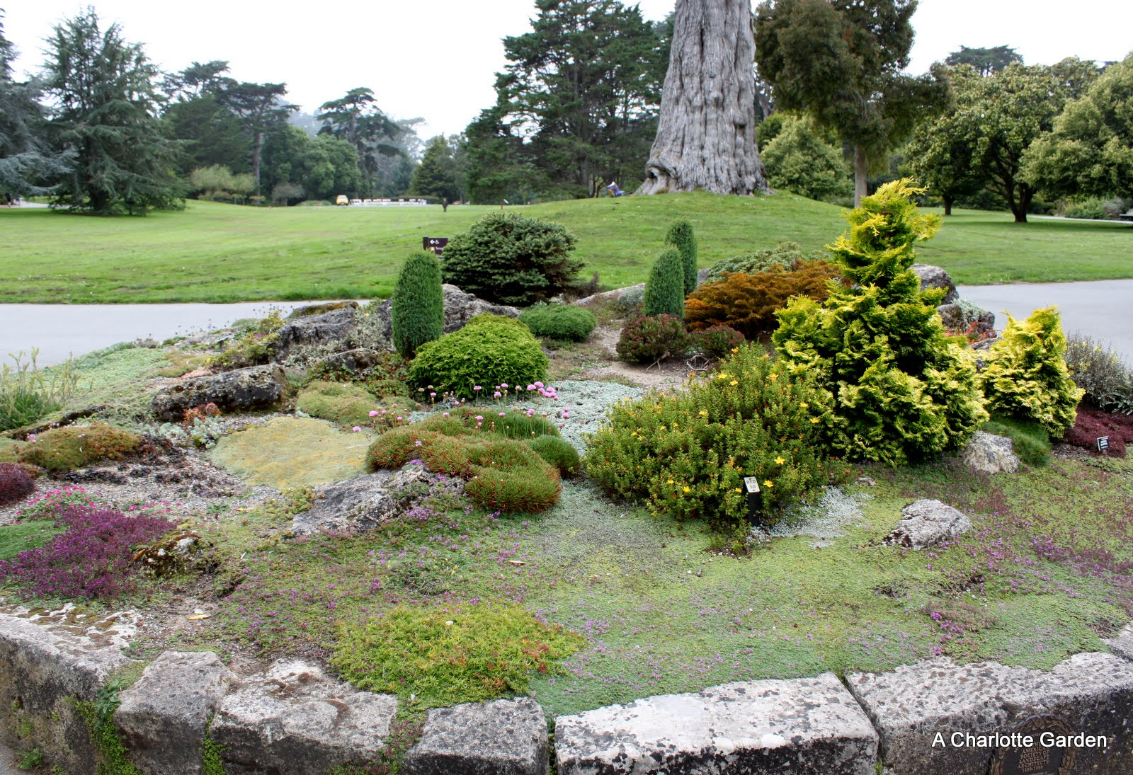 A Charlotte Garden Rock Garden At The San Francisco