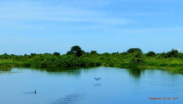 Biguás (aves pantaneiras) em uma lagoa do Pantanal