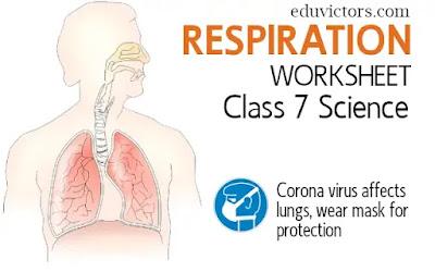 Respiration (Worksheet) - CBSE Class 7 - Science (#class7Science)(#eduvictors)(#biologyforkids)