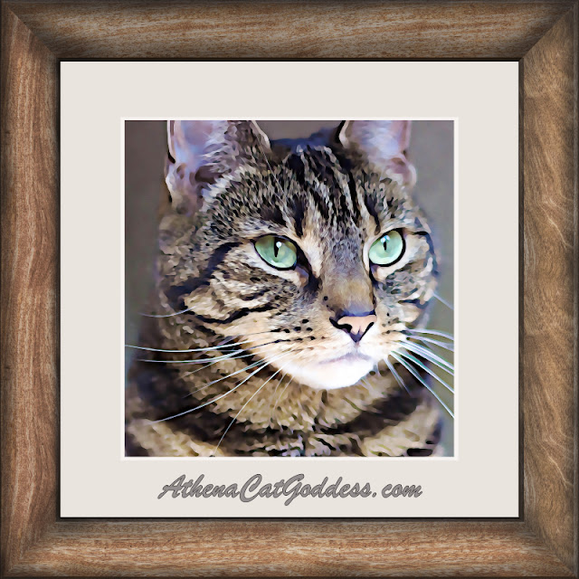 tabby cat art frame