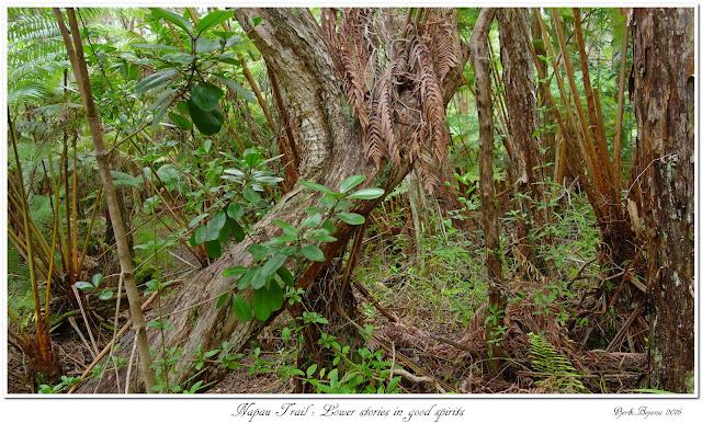 Napau Trail: Lower stories in good spirits
