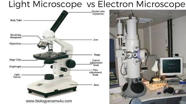 Difference between Light Microscope and Electron Microscope (Light  Microscope vs Electron Microscope)