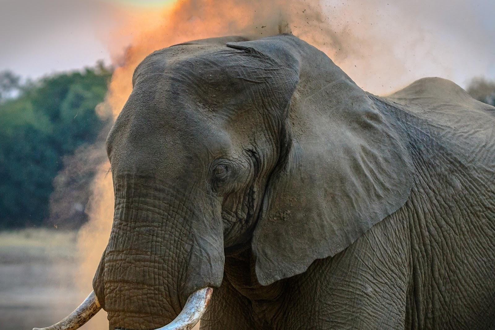 Ringkasan Sejarah Islam #1: Kelahiran Nabi Muhammad Di Tahun Gajah