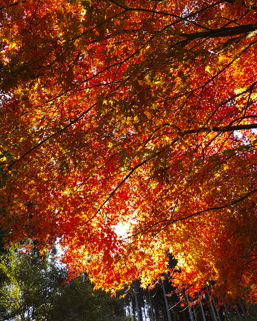 須木村の紅葉