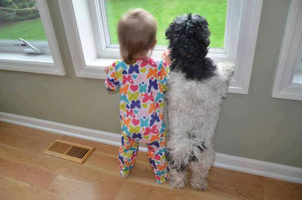 Funny kid and dog looking out the window picture