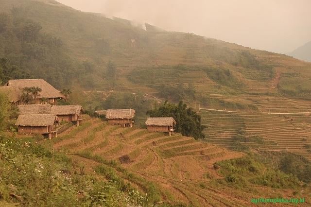 Bisnis usaha pertanian