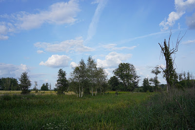 Łąki w pobliżu dawnej wsi Ławy