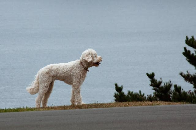 Cómo actuar en un accidente con un perro