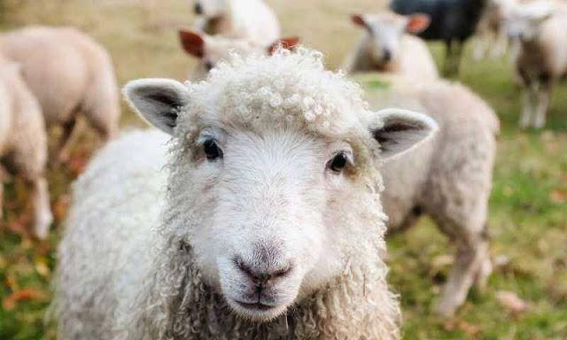 Armenia prohíbe antibióticos como aditivos forrajeros