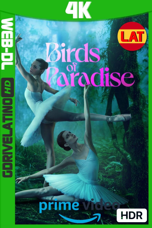 Aves del Paraíso (2021) AMZN WEB-DL 4K HDR Latino-Ingles MKV