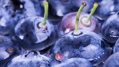 gambar pohon blueberry