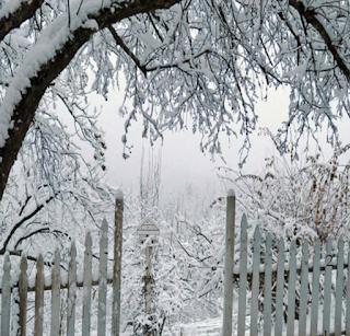 Snow Deer Escape