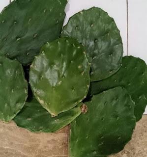kaktus-centong-impor-murah.jpg