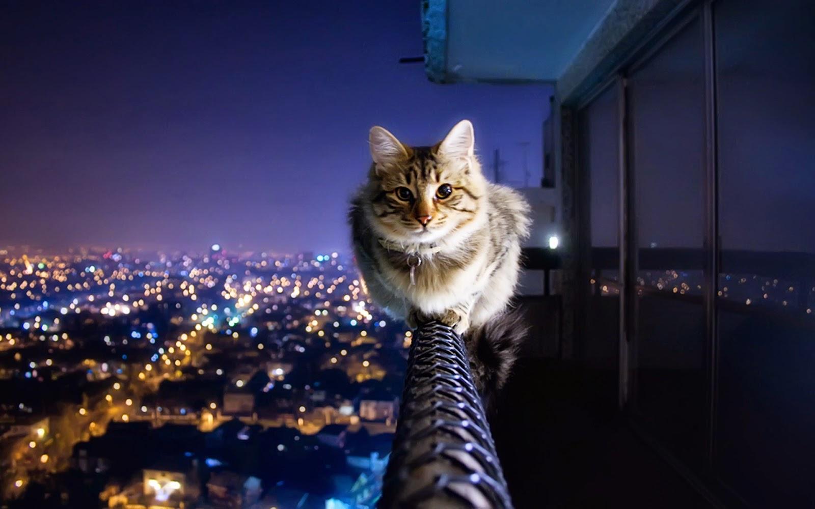 10 Wallpaper Kucing Keren Lucu Dan Menggemaskan