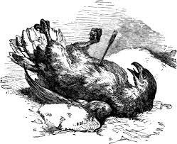el-águila-y-la-flecha